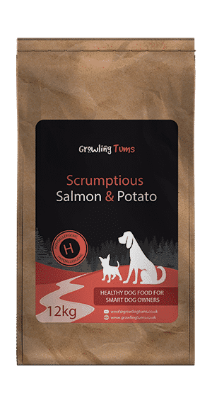 Salmon & Potato Dog Food